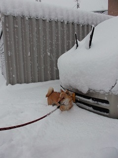 14日の豪雪1.jpg