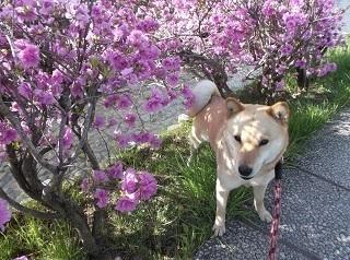 何かのお花2.jpg