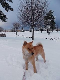 再び大雪.jpg