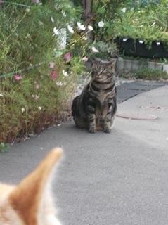 猫ちゃん2.jpg