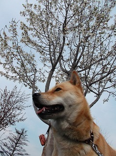 白いお花.jpg