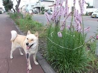 紫のお花.jpg