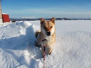 雪原とお山.jpg