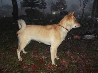 霧の夕方.jpg